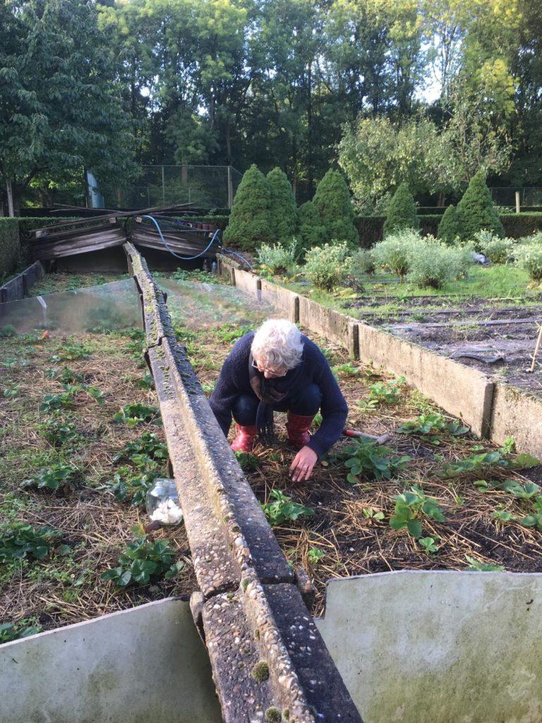 Vrijwilliger moestuin | Landgoed Vrederijk